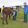 Aktion Rollentausch Tierpark Sommerhausen 199